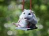 hamster-on-a-swing